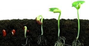 brevetto nuovo seme